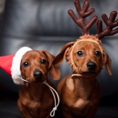 Just thinking...outfits for the kids. 5 reindeer? Santa = Cooper, Elf = Poppy, Elf = Lenny, reindeer = lucy and albert