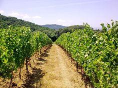 Val di Cornia DOCG interessa i vigneti che sorgono nelle aree più adatte alla viticoltura dei comuni di Suvereto, Campiglia, San Vincenzo, Piombino e Sassetta (tutti in Provincia di Livorno) ed il vino contraddistinto con questa denominazione è a base Sangiovese (minimo 40%) con eventuale apporto di Cabernet Sauvignon e/o Merlot fino al 60%. A partire dalla vendemmia 2011 è possibile destinare le uve raccolte alla produzione dei vini che si possono avvalere della DOCG Val di Cornia in…