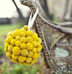 Billy Balls (also known as Billy Buttons or Craspedia) add a fun and unique twist to your wedding bouquets, boutonnieres, table centerpieces, flower arrangements, wedding cake, and more. They have very long and brilliant green stems with a round shaped, bright yellow head and wonderful texture. They add amazing visual interest! Billy Ball Flowers stand out …