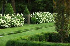 hydrangea hedges | Killer Views
