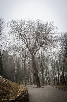 Gray Day Nature Photos, Snow, Gray, Amazing, Outdoor, Grey, Outdoors, Outdoor Games, Outdoor Life