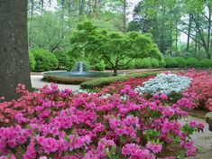 Glencairn Garden's beautifully landscaped lawns and walkways have made it a popular attraction among residents and visitors to Rock Hill for many years. What started as the backyard garden of David & Hazel Bigger in 1928 is now an 11 acre paradise located in the heart of Rock Hill . . . and it continues to grow.