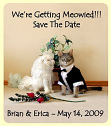 maybe we could send out another set of save the dates? // I'm actually really into this. Probably because I'm more likely to plan a cat wedding than an actual one
