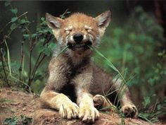 Google Image Result for http://www.8screensavers.com/screensavers/preview/s/m/smiling-hyena-animal-1-screensaver.jpg