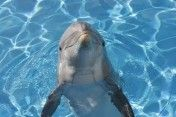 Get an up close and personal look at Atlantic bottlenose dolphins at the Texas State Aquarium in Corpus Christi!
