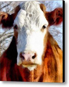 Brown And White Cow - Animals - Cows -art Canvas Print / Canvas Art By Ann Powell