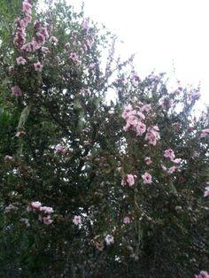 Winter flowers in Carmel Valley Ranch, California.  #FoodTravels