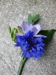 cornflower buttonhole - Google Search