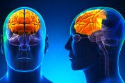 Increased activity in older brains may point to new avenues for treating memory loss