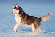 #dog #winter #snow #zolux