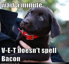 I'm still trying to figure out when our dog learned to spell becuase she absolutely knows that v-e-t does not spell bacon, she also knows l-e-a-s-h, r-e-s-t, w-a-l-k, d-i-n-n-e-r, f-o-o-d, and my personal favorite C-H-E-E-S-E; a-m-a-z-i-n-g