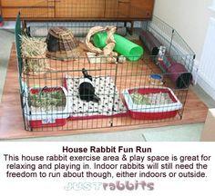 Rabbit Runs