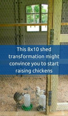 This 8x10 Shed Transformation Might Convince You To Start Raising Chickens