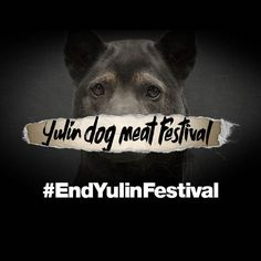 #EndYulinFestival Please help Animals Asia end the Yulin dog meat festival and stop the slaughter of thousands of dogs by joining me in signing and sharing this open letter: