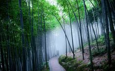 Photos taken June 6, 2014- The Bamboo Sea scenic spot in Yibin, Sichuan province. The Bamboo Sea, which is 600-1,002 meters above sea level, is well-known for its bamboo forests and views