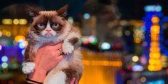 Grumpy Cat hits Las Vegas, new book, funny cats, pet entertainment, cosmopolitan.co.uk -Cosmopolitan.co.uk