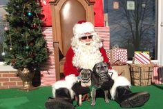 Annual Santa event.  #naturallylocal #pugs