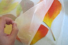 How to preserve colorful fall leaves with wax paper. Place leaves between sheets of wax paper. Place sheet over top, iron w/o steam. Let cool. Peel off wax paper. Will stay looking beautiful for weeks.