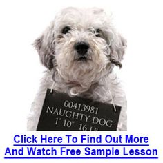 Dove Cresswell's Dog Training Online Review