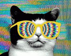 Diseño posmoderno, psicodelia reciclada y la repetición como medio cómico. Ah, y gatos.