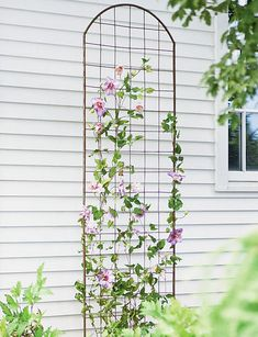 Our Jardin Flower Trellis is a metal trellis with a classic arch but an overall understated design ideal for clematis and other climbing plants. Clematis Trellis, Flower Trellis, Garden Trellis, Plant Trellis, Clematis Flower, Garden Bed, Wall Trellis, Metal Trellis, Trellis On Fence