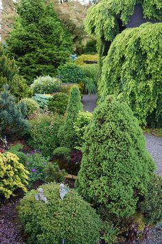 Trough Gardens with COnifers (4) | Flickr - Photo Sharing!