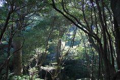 花山歩道。森に朝日が降り注ぐ。