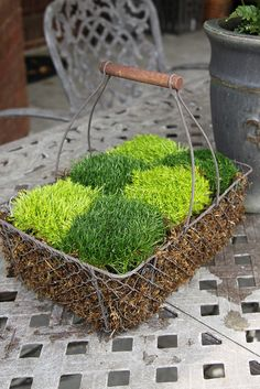 Moss Checkerboard arrangement in a chicken wire basket by Unskinny Boppy