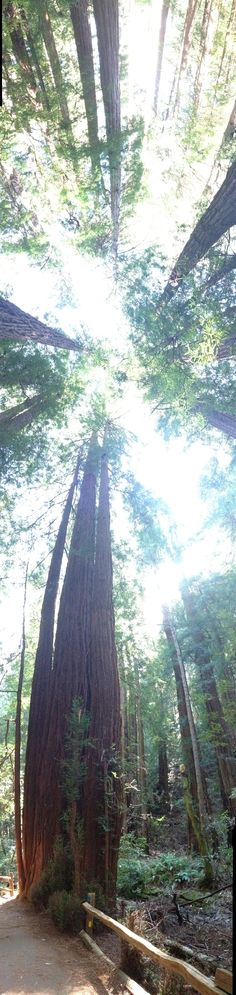 I walked in Muir Woods today and remembered that there is beauty everywhere.