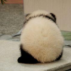 いいね!97件、コメント9件 ― なつさん(@_natsu_panda_)のInstagramアカウント: 「モンスターボール、では、ない。 #ジャイアントパンダ #パンダ #giantpanda #panda #アドベンチャーワールド #adventureworld 20150417」