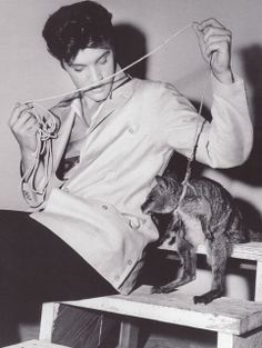 Elvis With a Kangaroo ~ Pets Owned by Elvis Priscilla Presley Animal Rights at Graceland