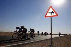 12. Februar 2014: Das #Etappenrennen für #Radrennfahrer findet seit 2002 jährlich in #Katar statt. (Foto: dpa)