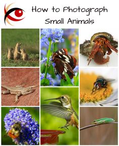 Welcome to my new blog series: great subjects! First lesson: photographing small animals.  http://annemckinnell.com/2016/02/10/small-animals/ #photography #animals