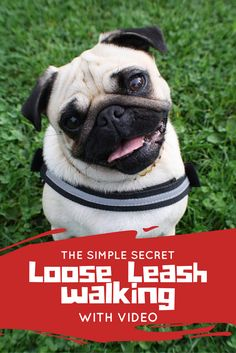 Loose Leash Walking Dog