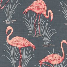 """Résultat de recherche d'images pour """"flamingo 4murs"""""""