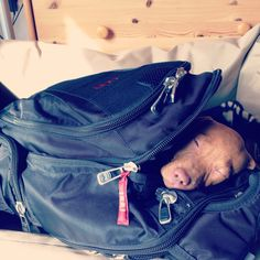 "I'll take my nap ""to go"", please"