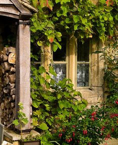 | ♕ |  Ivy cottage in Lower Slaughter, Cotswolds  | by © Anguskirk