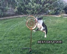 Saturday's Funny Animal Picture Dump 21 Pics