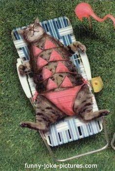 Funny Tanning Pussy Cat Bikini Picture