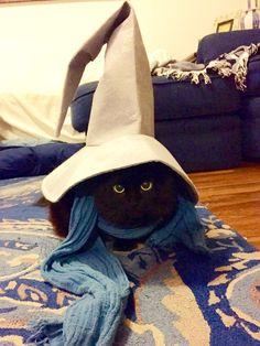 "That is what they used to call me, Gandalf the Grey. I am Gandalf the Kitteh. ""YOOOOOU SHALL PEEEEEET!"" Photo/caption via Imgur"