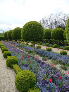 (via g a r d e n s / So charming! Topiaires and tulips in a formal garden.