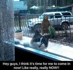 Cat wants in. Theres a bear outside!