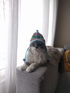 Inca cat