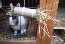 Cardboard-Roll-Rabbit-Hay-Toy