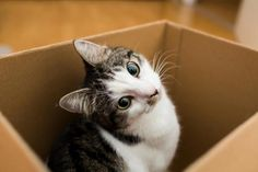 There are researches showing that by only watching cat videos people can create positive emotions and boost energy. Connected with that, many people have developed an attitude that a house only becomes a home when a cat lives in. Therefore it is not a surprise that cat owner have a number of benefits by their pet.
