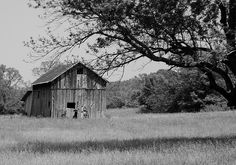 Deserted old barn.  Photo by Richard M Nixon.