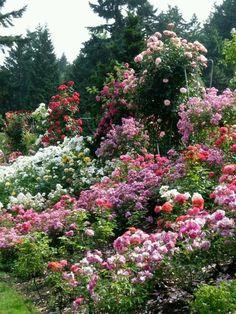 Rose garden, Portland, Oregon.