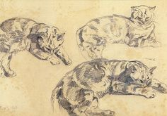 Trois études de chats allongés  -1843,  Eugène Delacroix,  (1798-1863),  Musée national Eugène Delacroix.