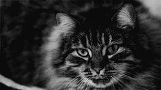 Котики | СПЛЕТНИК