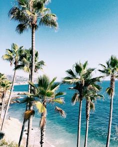 Most popular summer photography beach summertime palm trees Ideas Summer Vibes, Photography Beach, The Beach, Summer Beach, Summer Aesthetic, Flower Aesthetic, Blue Aesthetic, Aesthetic Fashion, Tropical Vibes